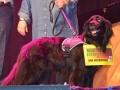 hond met bordje